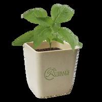 Basil Planter Starter Kit Thumb