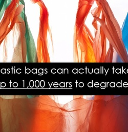 Frequently Asked Questions: What Are Insulated Bags?